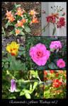 Flower Package vol 2