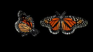 {MMD} Monarch Butterfly {DL}