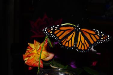Butterfly Fun by TThealer56