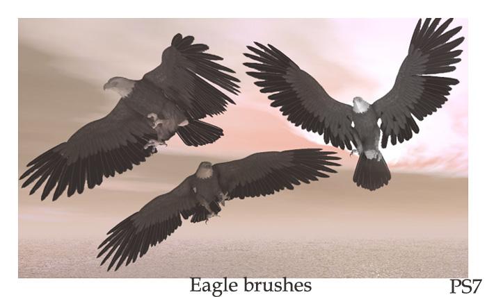 Eagle brushes