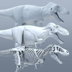 Tyrannosaurus 3D Anatomy Study