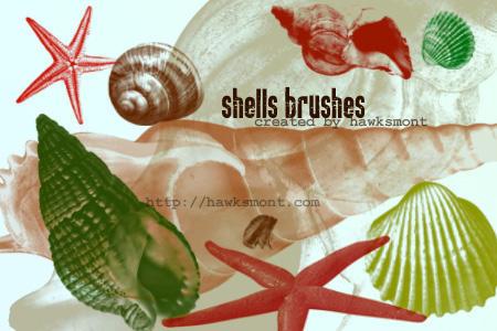 Shells by hawksmont