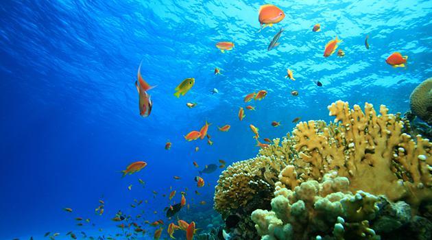 Подводный мир на обои рабочего стола