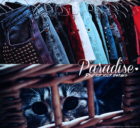Paradise PSD - For Your Images