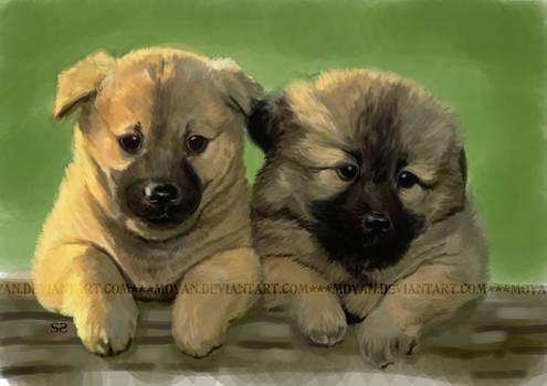 speed paint-puppies