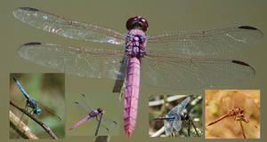 Dragonflies Zip