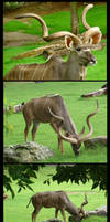 Kudu Package