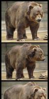 Brown Bear Package