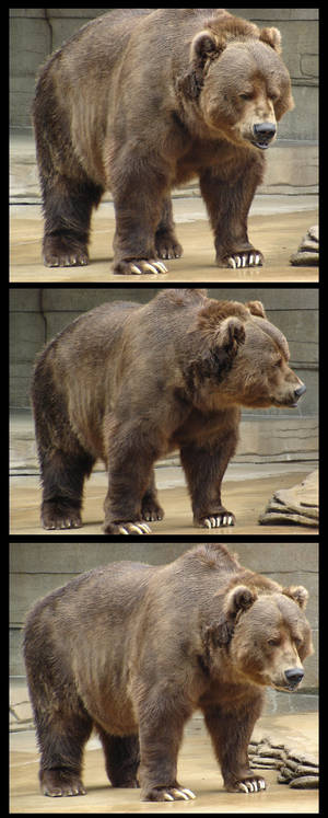 Brown Bear Package