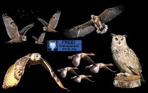 BIRDS by Atlantis0815
