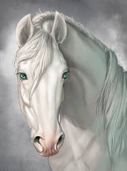 Equine portrait animation by AonikaArt