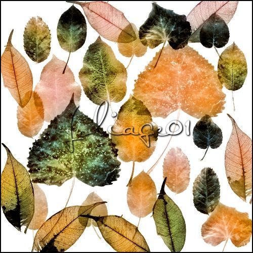foliage 01 by ShadyMedusa-stock