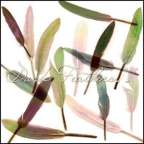 Duck Feathers II by ShadyMedusa-stock