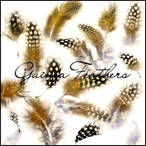 Guinea Feathers by ShadyMedusa-stock