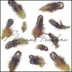 Pheasant Feathers by ShadyMedusa-stock
