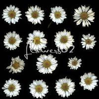 flower02 by ShadyMedusa-stock