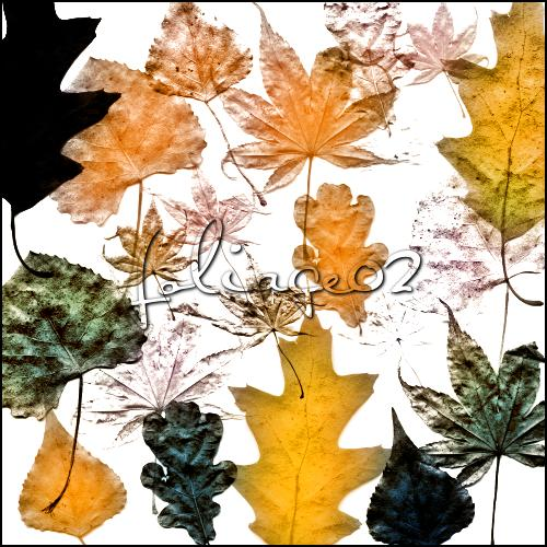 foliage 02