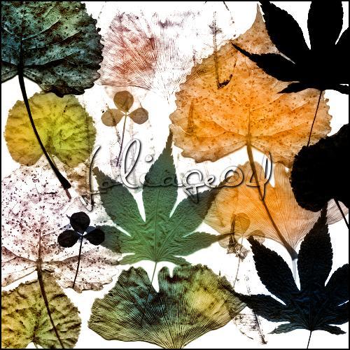 foliage 04