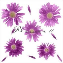 flower11 by ShadyMedusa-stock