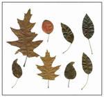 8 feuilles