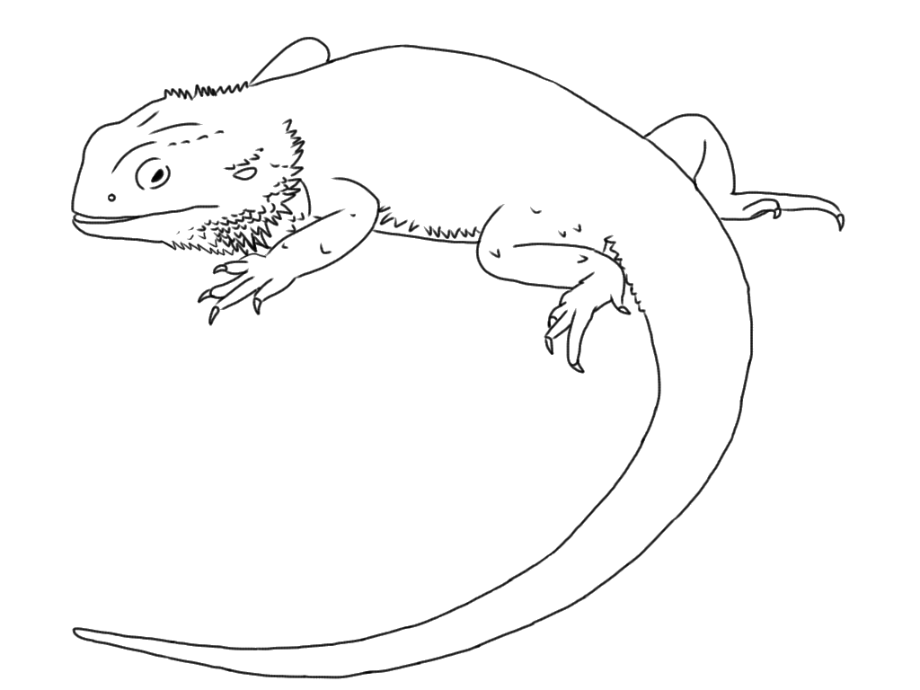 kaboose coloring pages printing gecko - photo #12