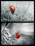 Lady in Red by Ni0n