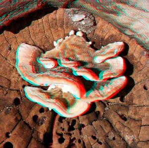Stereo Fungi
