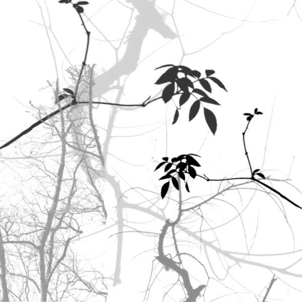 Branches brush