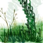 Plant Life Brushes