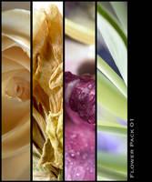 Flower Macro Pack 01 by nighty-stock