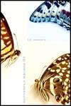 Butterflies Macro 01
