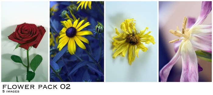 Flower Pack 02