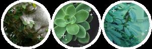 f2u green aesthetic divider by MilkyKoneko