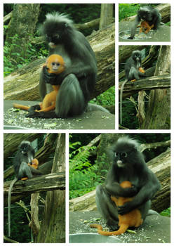 Monkey with baby stock pack