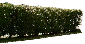 hedge psd