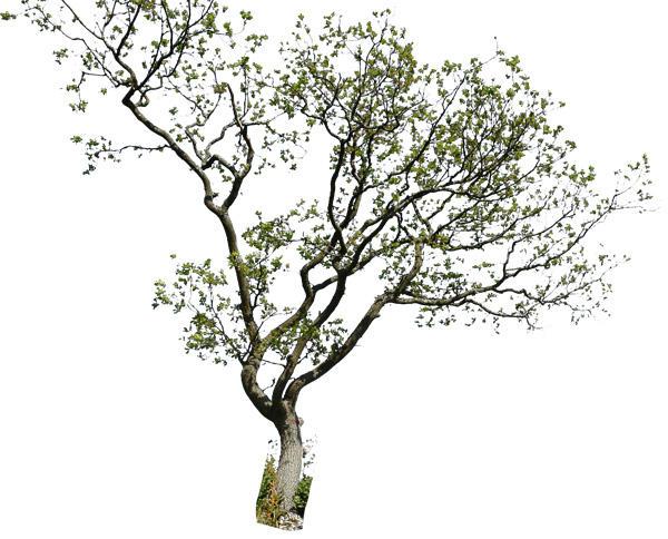 tree 2 psd by gd08