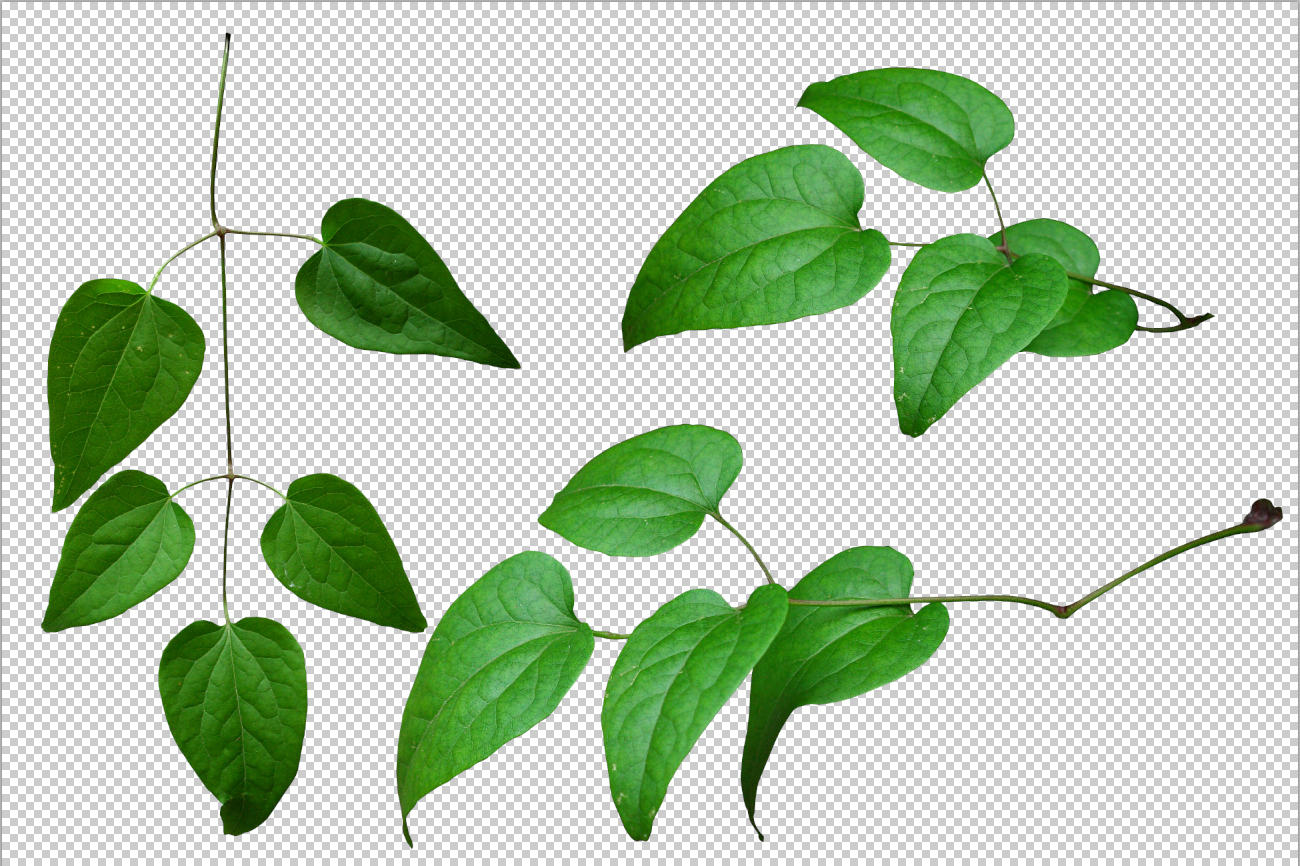 Leaves Png By Gd08 On Deviantart