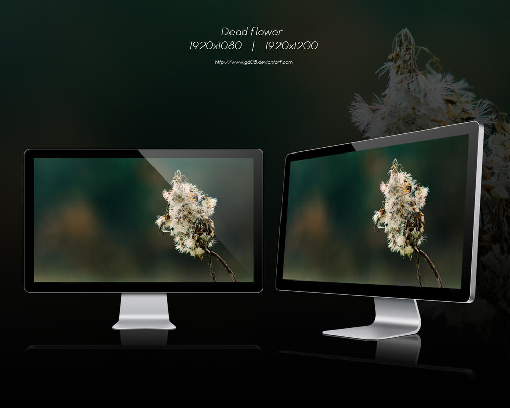 Dead flower 02 wallpaper by gd08