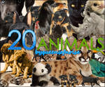 20 Animals PNG's