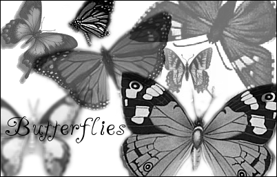 Butterflies by Irmes