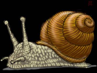 Draw a Snail by zenzmurfy