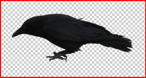 Crow .psd cut out 2