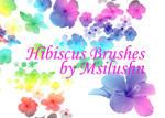 Hibiscus - Brushes