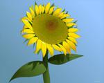 Sunflower _ Girasol