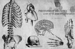 anatomical brushes