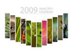 2009 Macro Calendar