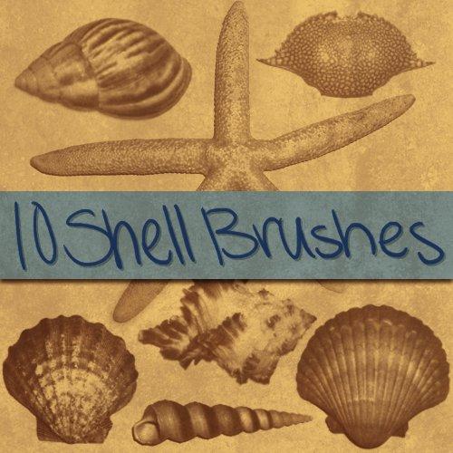 Shell Brushes 1