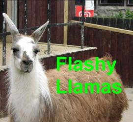 The Llama Song by burtonearny