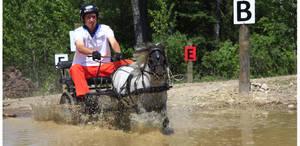 Jon Ohman Driving a Miniature Horse Through Water