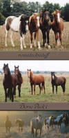 Horse Pack 1
